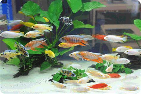 ornamental fish aquarium november 2009