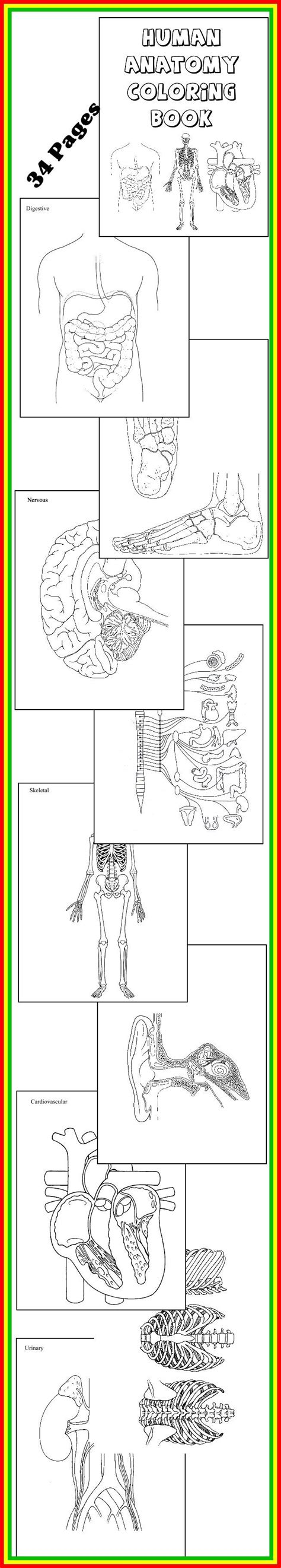 Human Anatomy Coloring Book Download Loading