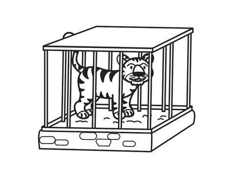 tigre in gabbia disegno da colorare tigre in gabbia cat 17709