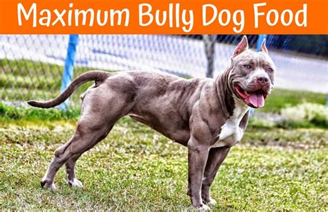 maximum bully food the best review and guide of maximum bully food us bones