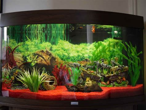 Decorating Ideas For Fish Tank Decoration Modern Aquarium Decoration Themes How To