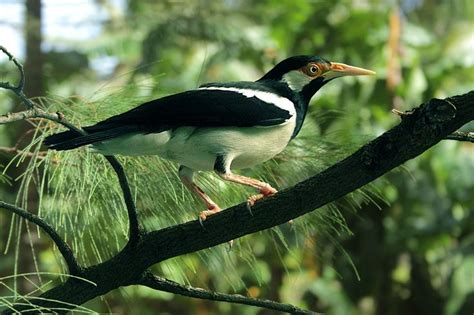 224 best images about burung cantik on pinterest love 86 best images about biodiversity birds indonesia on