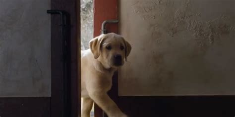budweiser puppy commercial 2013 budweiser s puppy bowl commercial 2014 wins our hearts again huffpost