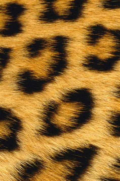 wallpaper iphone 5 leopard 640x960 leopard skin iphone 4 wallpaper