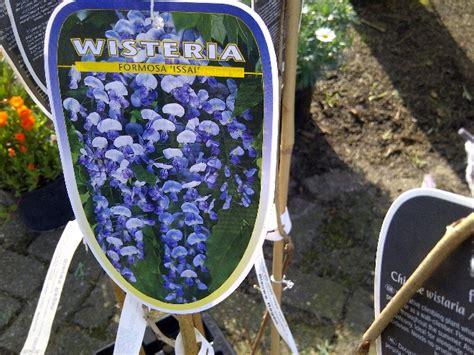 blauwe regen kopen boskoop jan den hertog tuinplanten boskoop