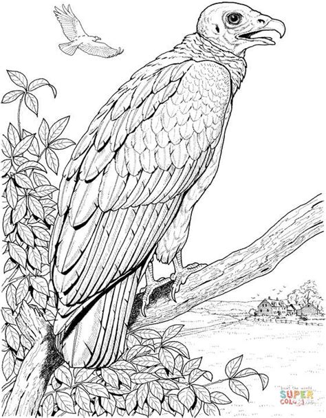 perched turkey vulture coloring page free printable