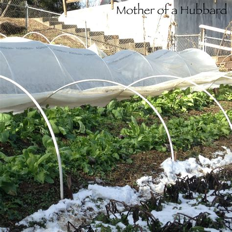 low tunnels vs cold frames