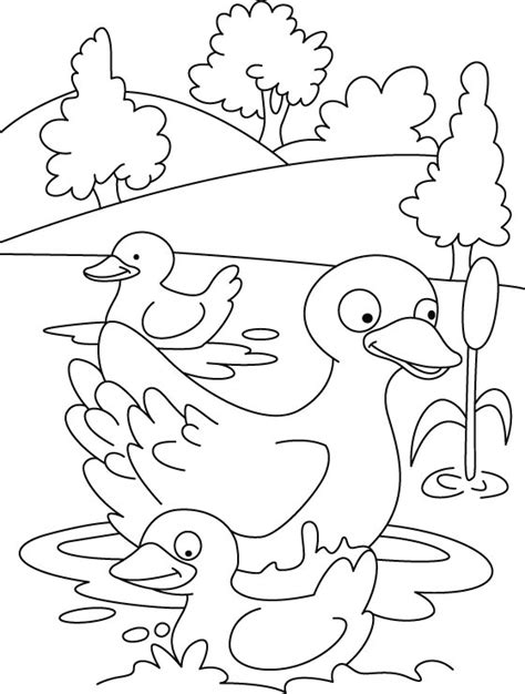 little duck coloring page five little duc colouring pages