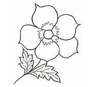 Colorat Flori Fluturi Desene Iarna Planse Imagini