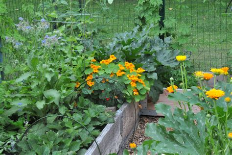 Calendula Petals And Wings Summer Garden Vegetables