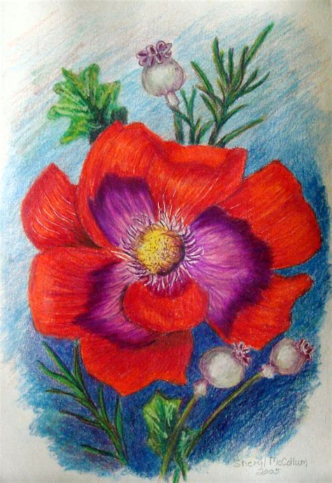 flowers in colored pencil red flower colored pencil drawing painting 6 x 9 by