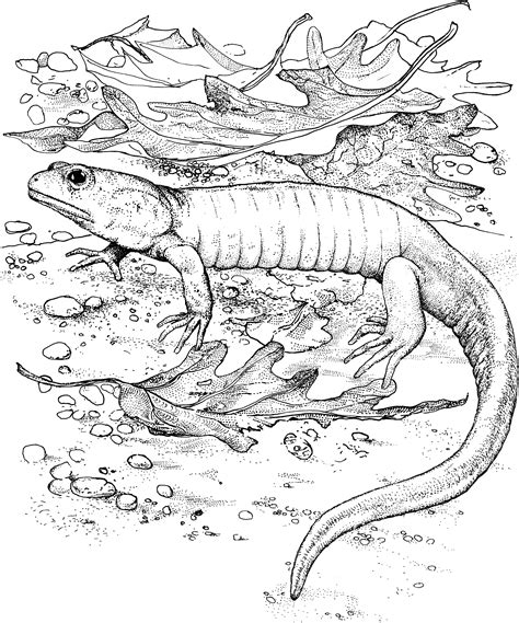 lizard coloring pages to print free printable lizard coloring pages for kids