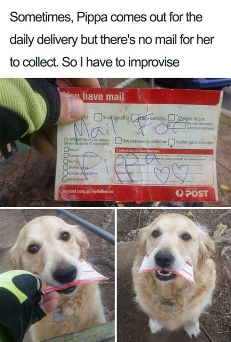 precious dog memes   turn  frown upside