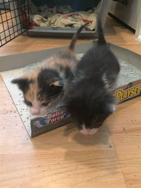 Raising A Cat Planner Box Set Buku Planner Buku Catatan Murah raising kittens msah metairie small animal hospital