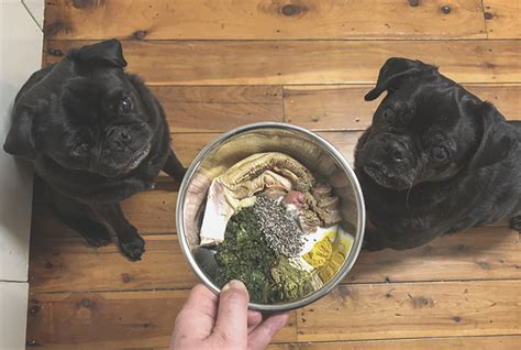 how much to feed a pug home the pug diary