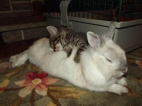bunny beds 11 04 12 i love funny animal sweet funny animal photo