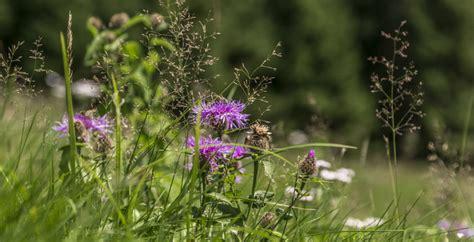 panorama fiori telefono montagna fiore