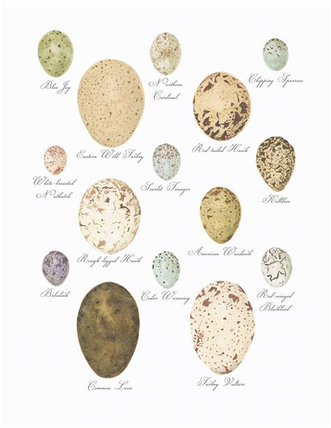 why are different colors why are bird eggs different colors ncpr news