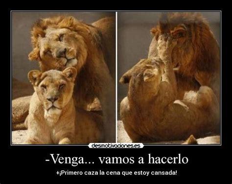 imagenes leones tiernas 15 im 225 genes de leones enamorados im 225 genes de enamorados