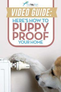 how to puppy proof your house how to puppy proof your home important tips on what you need to do