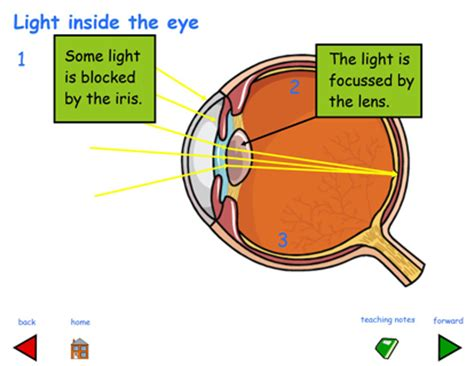 how does a see how do we see things rm easilearn
