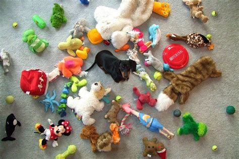 toys to keep dogs busy toys to keep them busy keeping your entertained when you re not around