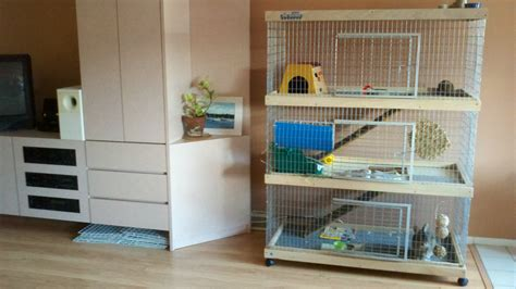 cage living room moving with a bunny olliverabbit fox
