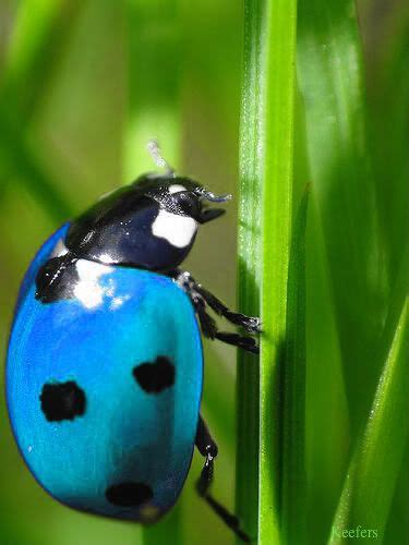 what color is a ladybug real ladybugs colors