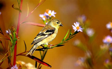 wallpaper with birds new lovely beautiful birds in jungle hd images photos