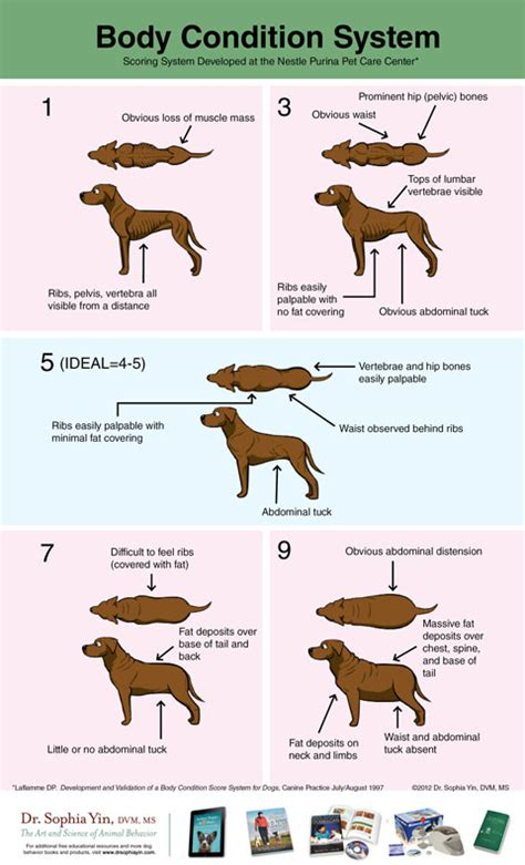 how to put weight on a puppy ideal weight condition for a growing puppy