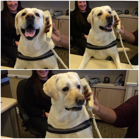 dogs meme templates imgflip