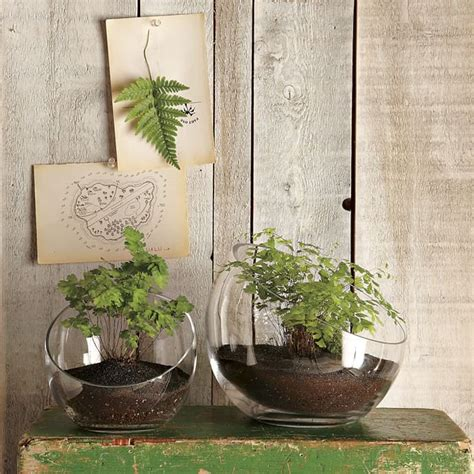 Hanging Garden In A Glass Bubble By Shane Powers For West Elm West Elm Wall Planter