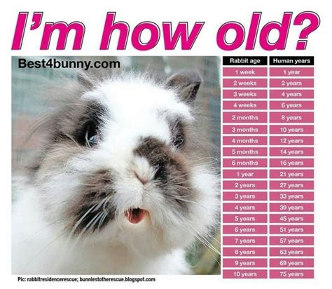 how to tell a 4yr how babies come out of mommys tummy what is a rabbit s age in human years quora