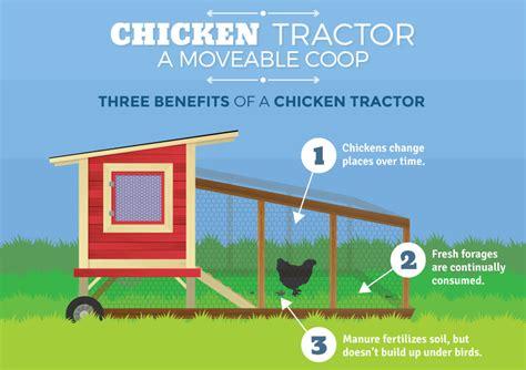 Raising Chickens at Home   Fix.com
