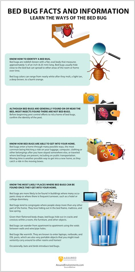Bed Bug Facts by Bed Bugs Facts Infographic Assured Environments