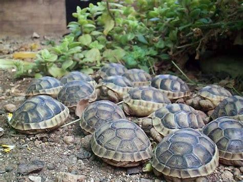 casa tartarughe prezzo tartarughe di terra tartarughe caratteristiche delle