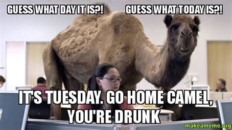 tuesday camel youre drunk  guess
