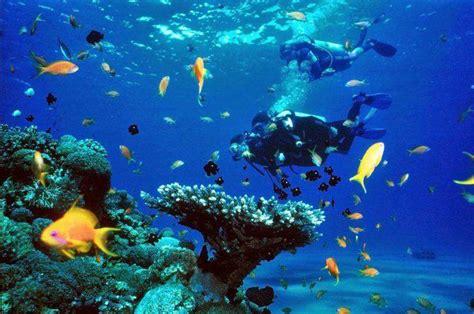 imagenes medicas en arrecifes los 6 mejores sitios para bucear en tailandia siamtrails