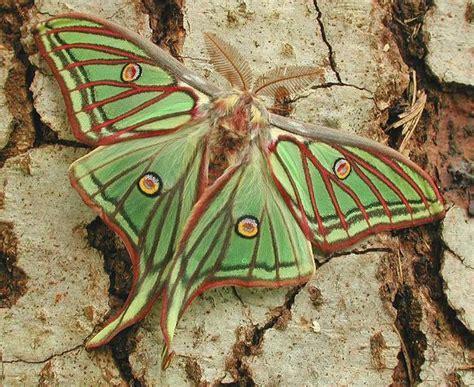 Zum Quot Der Schmetterling Le Papillon Quot Foto Bild