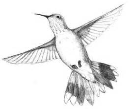 hummingbird drawing rufous hummingbird 10 000 bad drawings