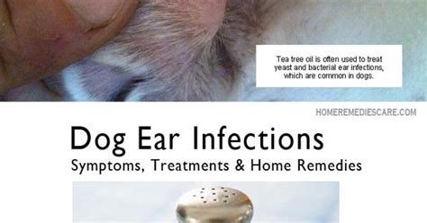 paw yeast infection home remedy home remedies care 13 home remedies for ear infection symptoms