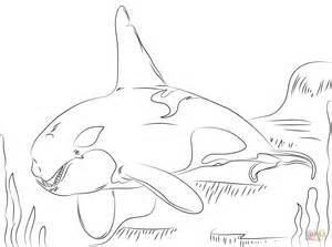 killer whale coloring pages beautiful killer whale coloring page free printable