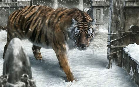 new year tiger animal new year animals snow tigers wallpaper allwallpaper in