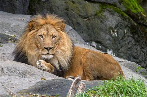 animals  woodland park zoo woodland park zoo seattle wa