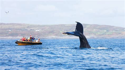 boat trip to ireland humpback whale watching boat trip in west cork ireland