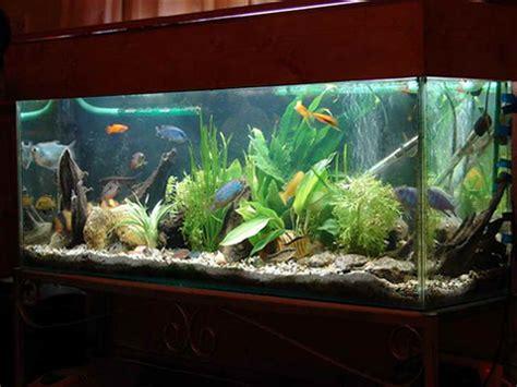design your aquarium indoor how to decorate fish tank designs ideas tank