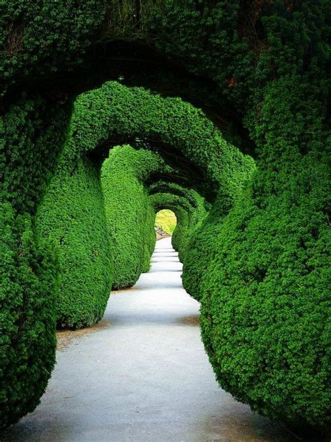garden topiary wire forms 1000 images about topiary on