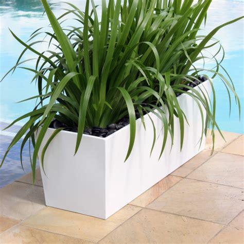 indoor plant gallery greenscene