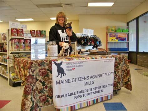pet stores in maine that sell puppies maine lawmaker proposes bill targeting puppy mills top tips