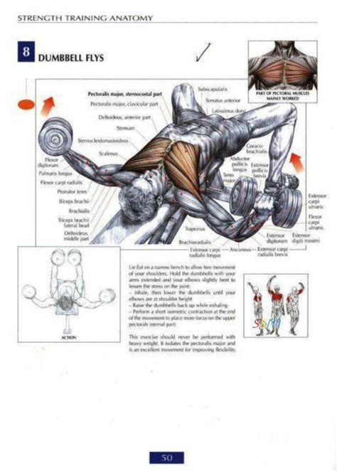 health and fitness programs chest workout routine for mass